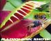 venus-flytrap-plant-radiomink